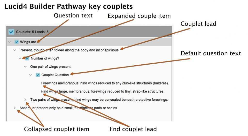 Lucid Builder pathway couplet tree diagram
